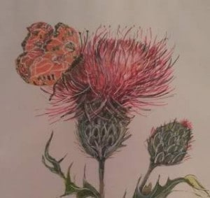 """Butterfly & Thistle"" copyright © 1998 Sarah Smith Bailey, all rights reserved."