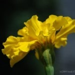 underside of yellow flower