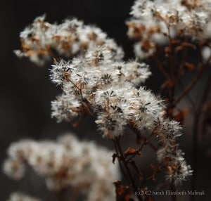 fuzzy weed in autumn off white, rust, gray colors