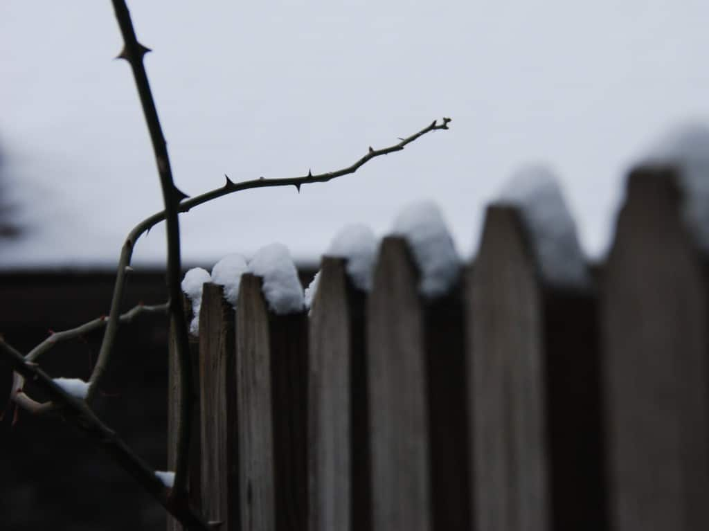 fence & thorns