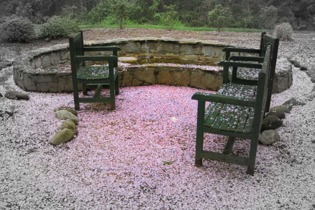 empty chairs in garden everything covered in pink cherry blossoms