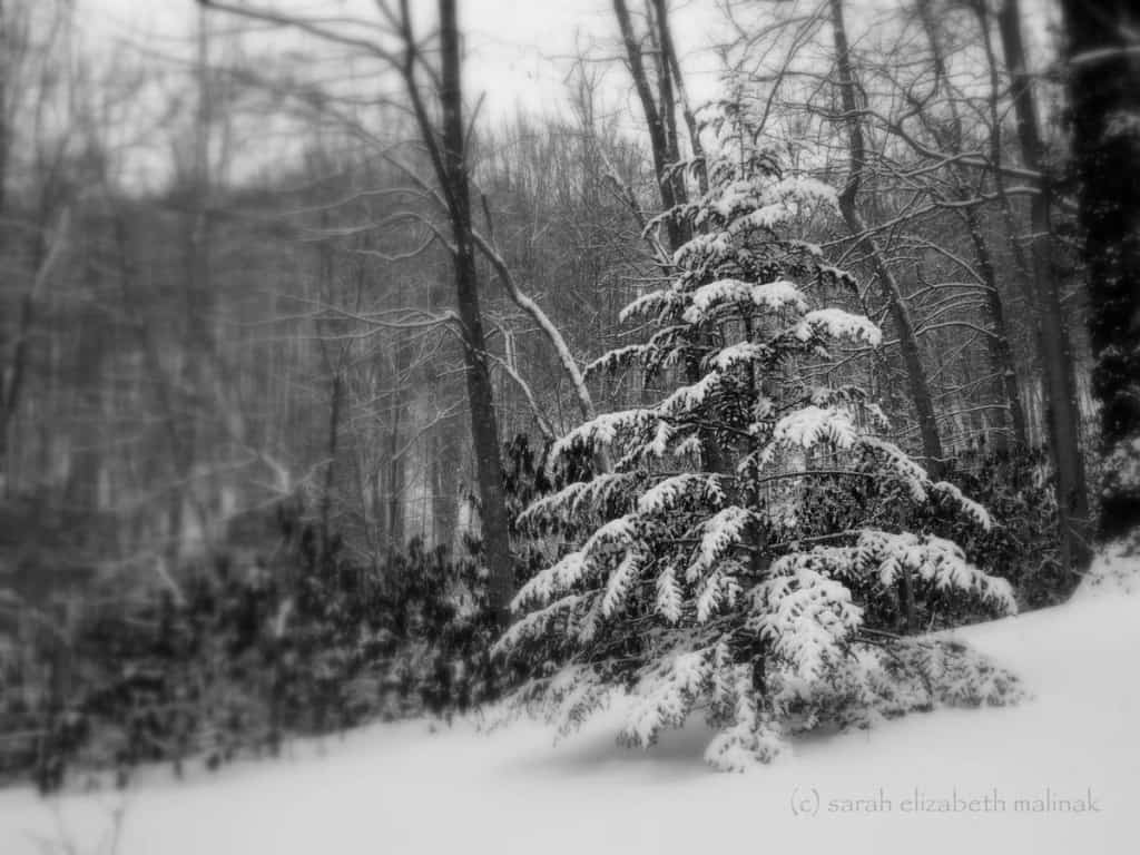 Tree in snow_b&w