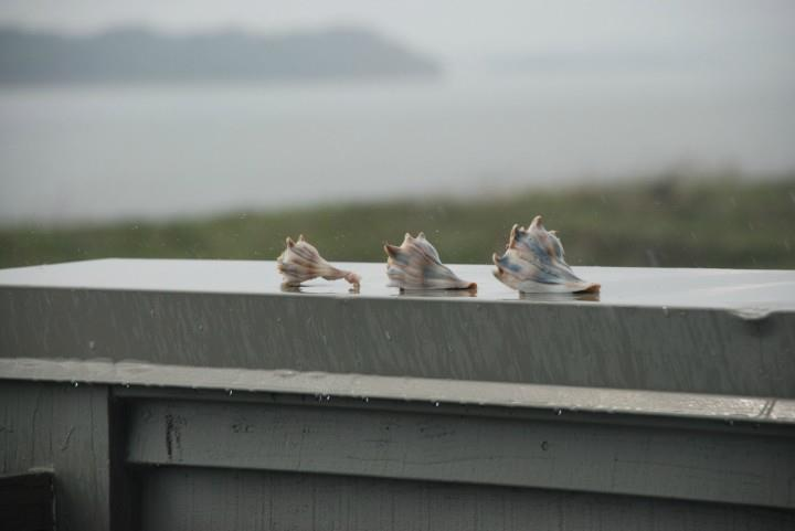 3-shells-on-railing-in-rain